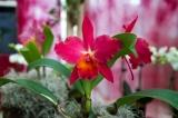 Flower & gardenshow