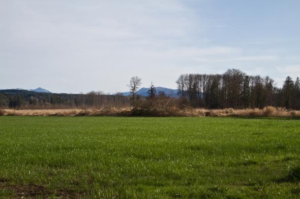 Green field in the sun