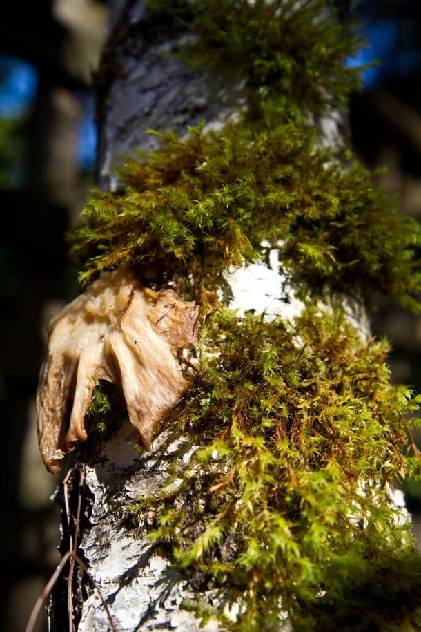 Moss and fungi growing on tree