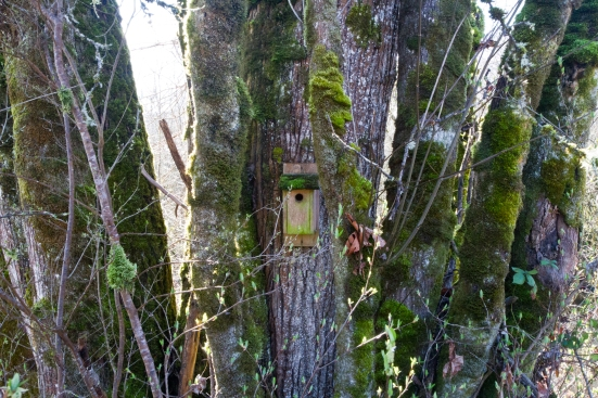 Bird house hidden in trees
