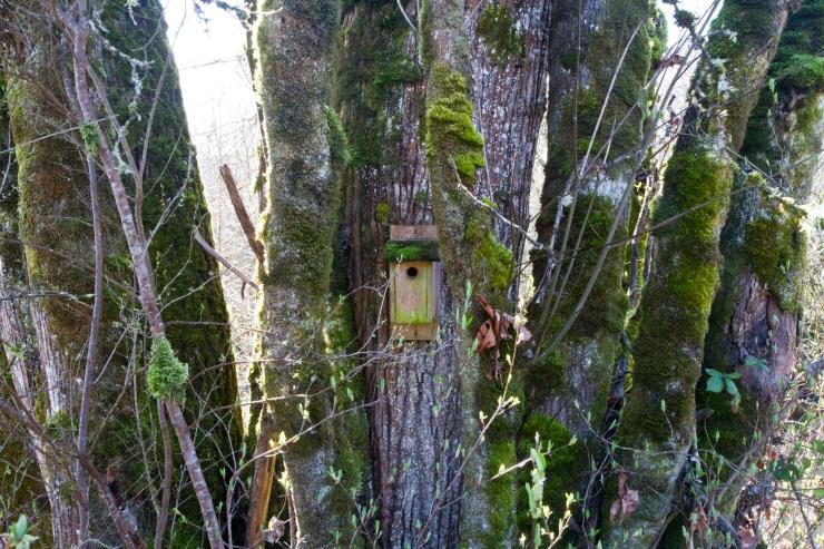 Bird house hidden in trees