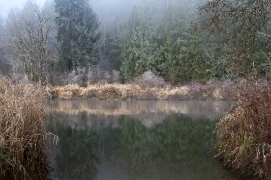 Treeline reflected in water