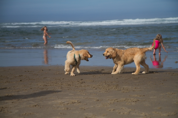 While at the beach Gus found a fellow puppy to play with in the waves